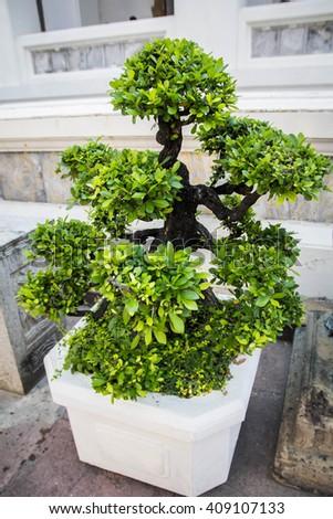 Hobby bonsai trees thailand 2016 - stock photo