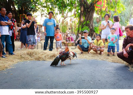 Hochiminh City, Vietnam - March 5, 2016 : traditional cockfighting is a scene activity from daily life in the villages of Vietnam is performaced in culinary fair of the Van Thanh tourist area HCMC - stock photo