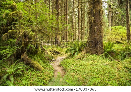 Hoh Rainforest in Olympic National Park, Washington State, USA - stock photo