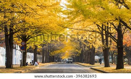 Hokkaido, Japan - 01 Nov, 2014 : The fall season in the autumn Hokkaido University - stock photo