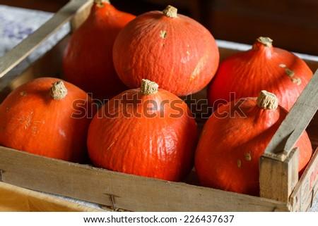 Hokkaido pumpkins - stock photo