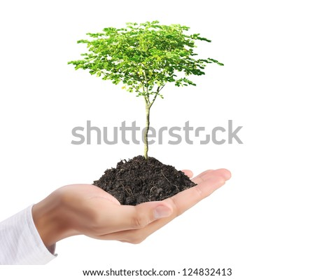 holding green plant in hand - stock photo