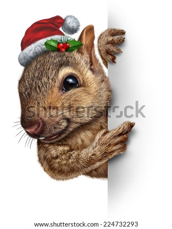 Holiday squirrel vertical sign wearing a santa clause hat with holly and red berries hanging over a blank banner with copy space gripping a billboard as a Christmas new year or winter message. - stock photo