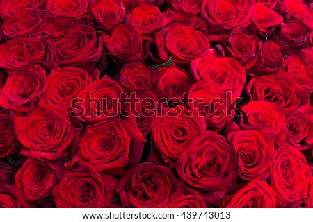 Holidays background red roses close up. Huge bouquet of red roses close up photo - stock photo