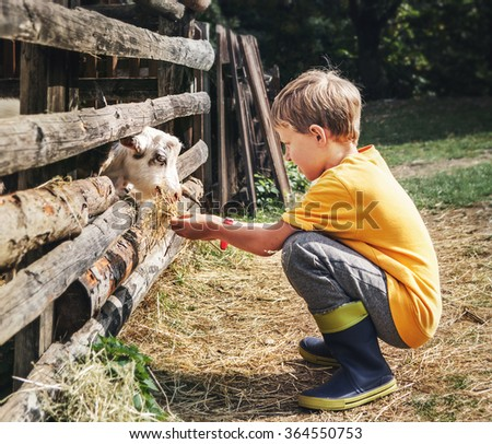 Holidays in the country - little boy feeds a goat - stock photo