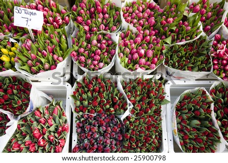 Holland tulips on the market - stock photo
