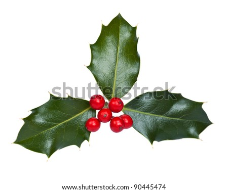 Holly and berries on a white background - stock photo