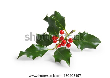 Holly branch with berries, cutout, isolated on white background - stock photo
