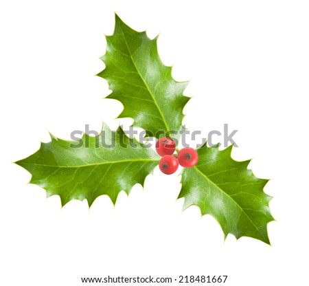 holly branch with berries  isolated on white - stock photo