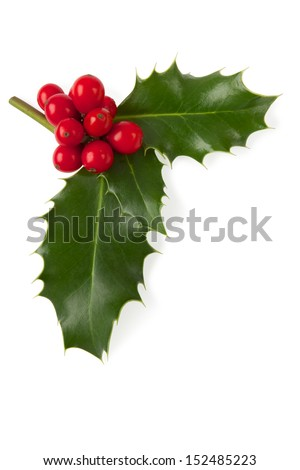 Holly Christmas decoration, Clipping path included. - stock photo