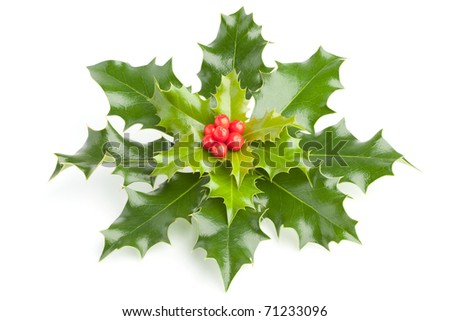 Holly (Ilex) with red berries, isolated on white - stock photo
