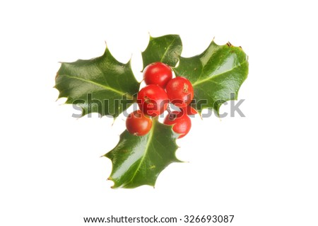 Holly, Ilex, with ripe red berries isolated against white - stock photo