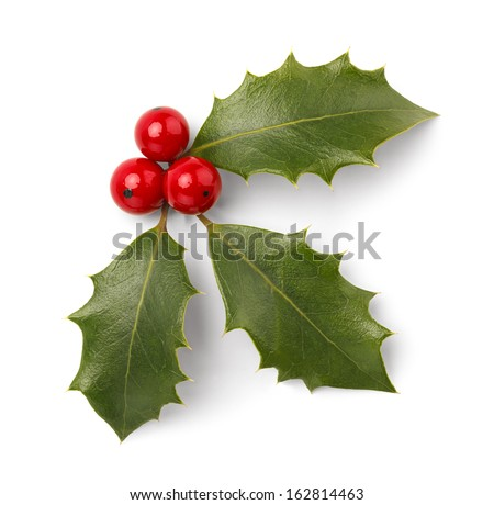 Holly Leaves and Red Berries Isolated on White Background. - stock photo