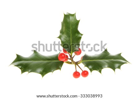 Holly with red ripe berries isolated against white - stock photo