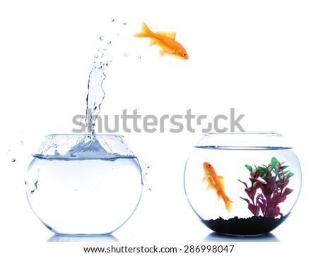 home change for a goldfish to a better place - stock photo