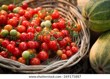 Home grown Cherry Tomatoes - stock photo