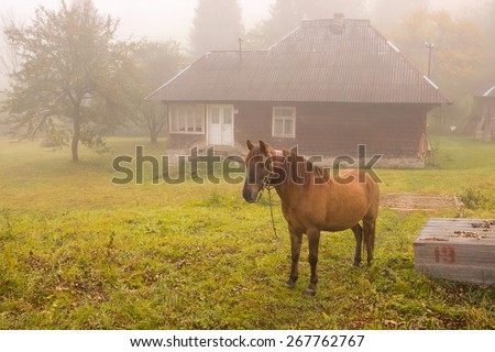 Home horse grazing in the yard - stock photo