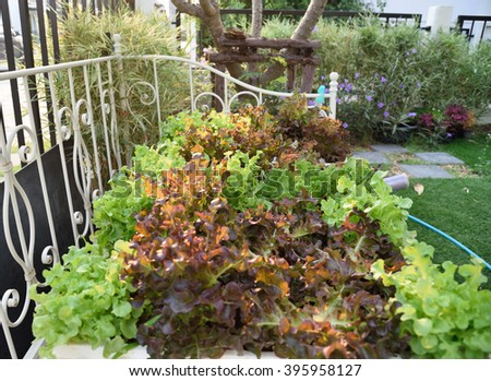 Home salad garden, growing vegetables in a cottage garden, Rustic Country Vegetable & Flower Garden with Raised Beds, Salad garden in vintage bed, greenhouse, Salad at home - stock photo
