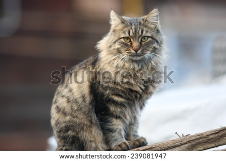 Homeless cat portrait in the autumn city - stock photo