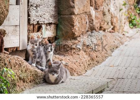 Homeless cats in Tuscany - stock photo