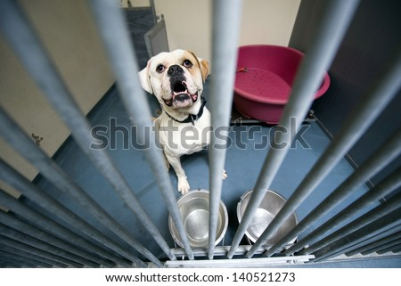 Homeless dog behind bars in an animal shelter - stock photo