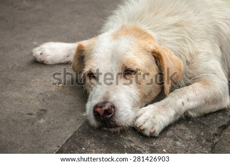 Homeless dog hope and sleep on the side street - stock photo