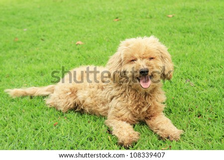 Homeless dog in the park - stock photo