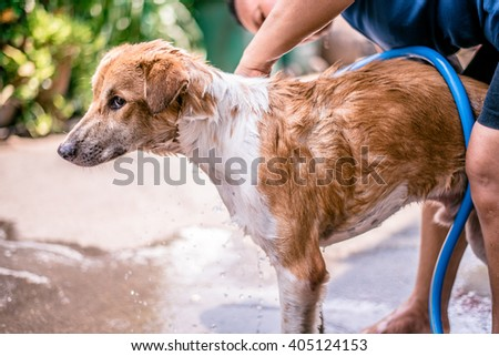 Homeless Dog Thai take a bath by a women on very hot weather  - stock photo