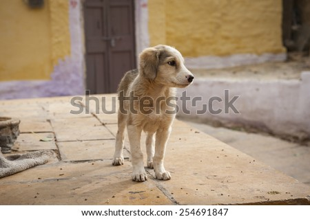homeless dog waiting something in a slag. - stock photo
