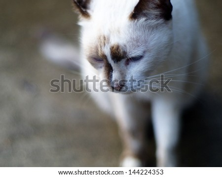 homeless hungry old white cat close-up - stock photo
