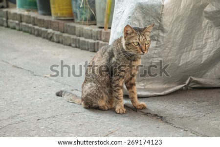 Homeless old cat - stock photo