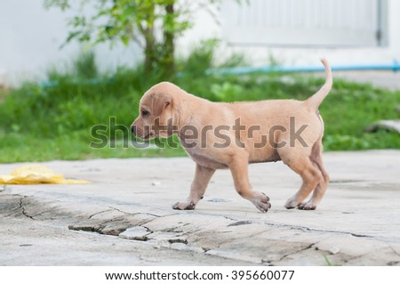 Homeless Puppy dog alone on the street - stock photo