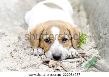 homeless puppy lying on the ground  - stock photo