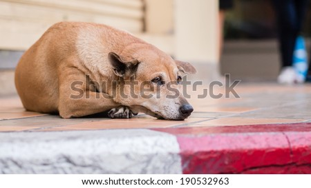 Homeless stray dog lonely on pavement - stock photo