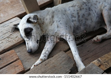 Homeless stray dog sleeping on the wooden ground - stock photo