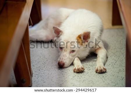 Homeless thai dog lay down under a chair - stock photo