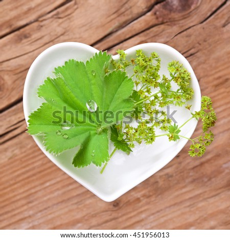Homeopathy and cooking with lady's mantle - stock photo