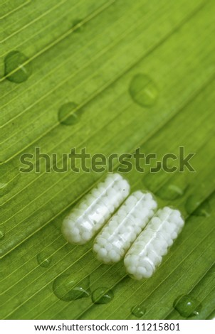 homeopatic pills over a green leaf with some water drops on it - stock photo