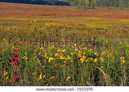 Homestead National Monument of America, Beatrice, Nebraska, autumn - stock photo