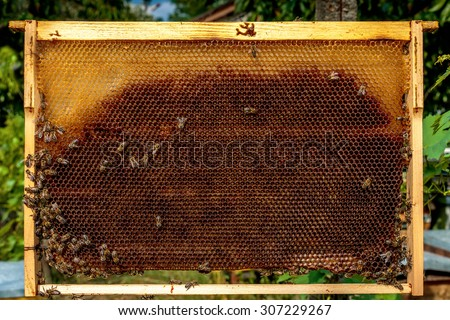 Honey bee frame from a hive with Collony Collapse Disorder covered with a few bees - stock photo