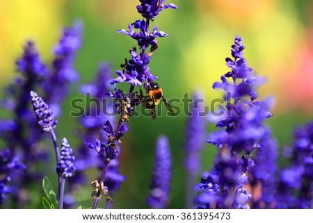Honey bee on flower. - stock photo