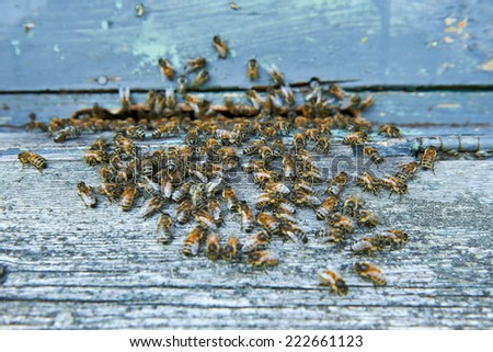 Honey bees at entrance of beehive - stock photo