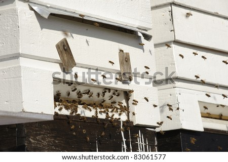 Honey bees before the hive entrance - stock photo