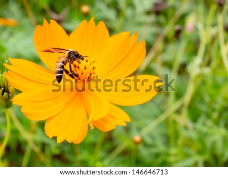 Honey bees collecting pollen in a field of blooming flowers - stock photo