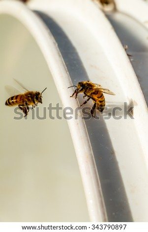Honey bees eating syrup residue  - stock photo