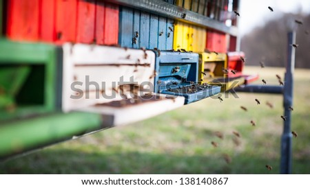 Honey bees in front of their colour beehive - stock photo