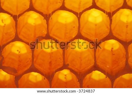 honey-cell - stock photo