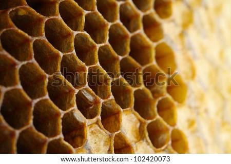 honey close-up - stock photo