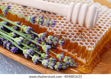 honey comb with lavender flowers - sweet food - stock photo
