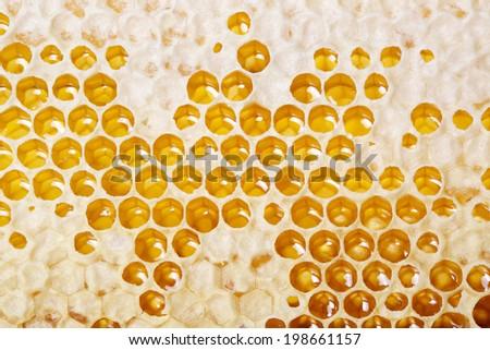 honey making in honeycombs  - stock photo
